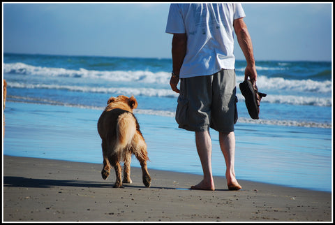 mans best friend man walking on beach with dog
