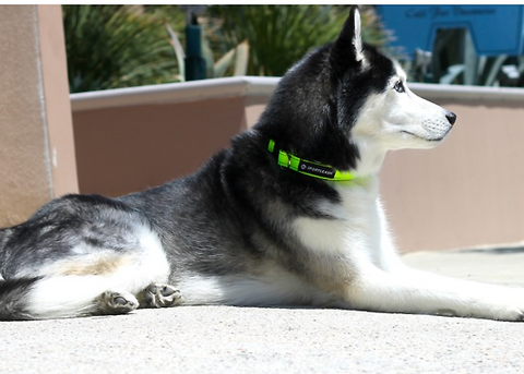 comfortable dog collar sport collar