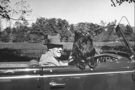 president franklin roosevelt and dog