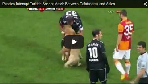 puppies run on field during soccer match