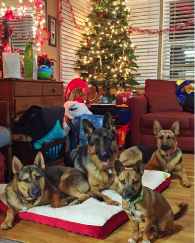 german shepherds of instagram remember gsds