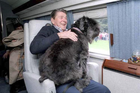 president ronald reagan and dog