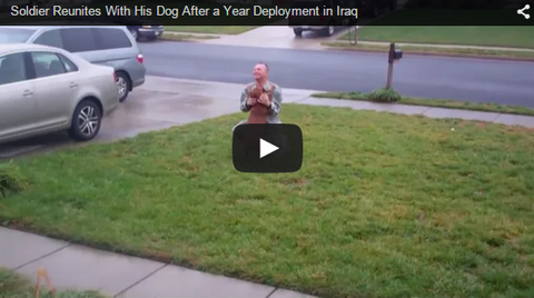 soldier reunites with excited dog after deployment