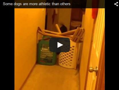 some dogs are more athletic than others
