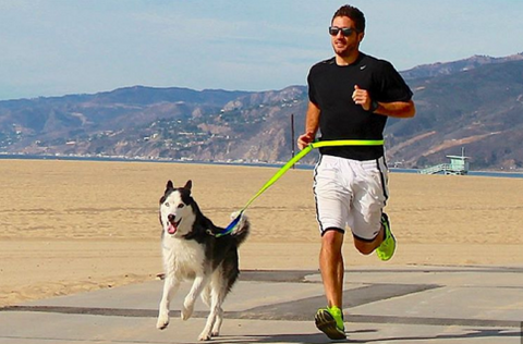 active dog owners running with your dog sportleash on instagram