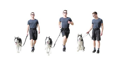 dog leash for running hiking