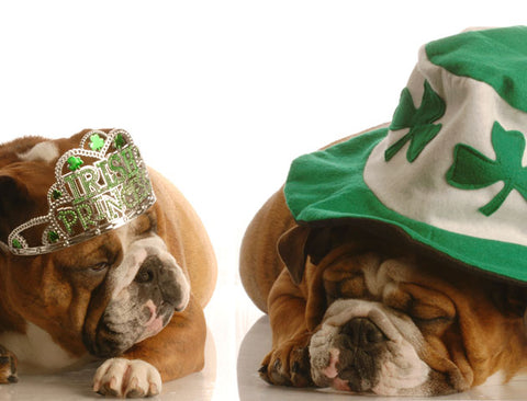 st pattys day bulldogs
