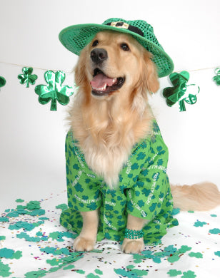 st pattys day dog golden retriever