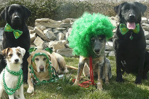 st pattys day dogs group