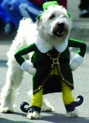 st pattys day dog funny