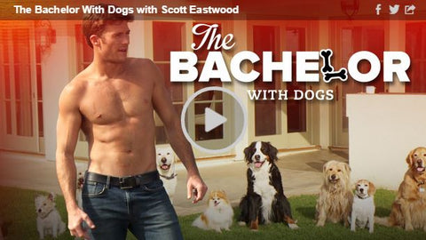the bachelor with dogs funny or die