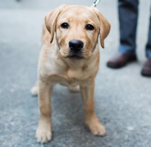 cute dog picture instagram the dogist puppy