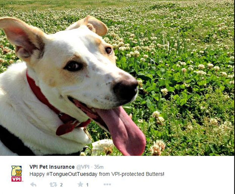 tongue out tuesday vpi pet insurance
