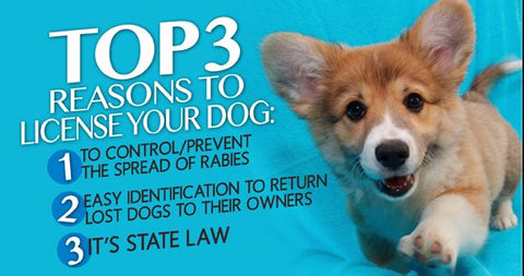 dog license info top three reasons to get a dog license