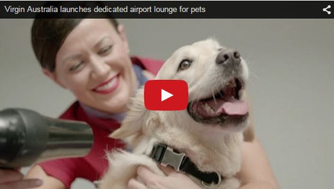 Virgin Australia to launch pet lounge in 2015