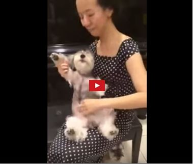 woman plays dog like guitar and dog loves it