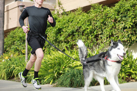 Hands Free Running Leash System Siberian Husky