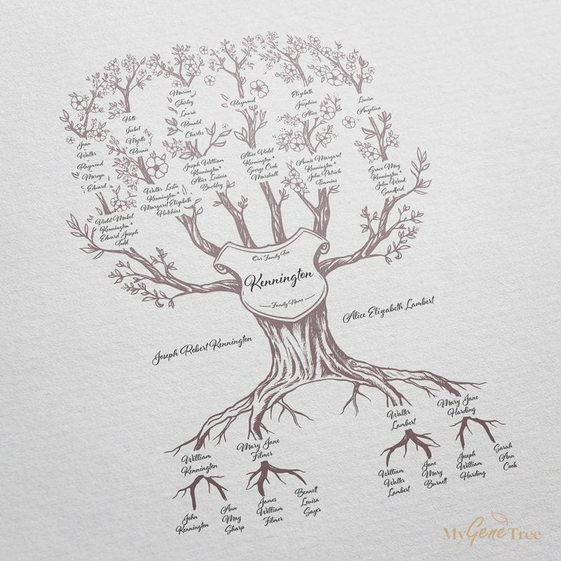 'Limited Edition' Family Branches Venus Digital Family Tree Template MyGeneTree