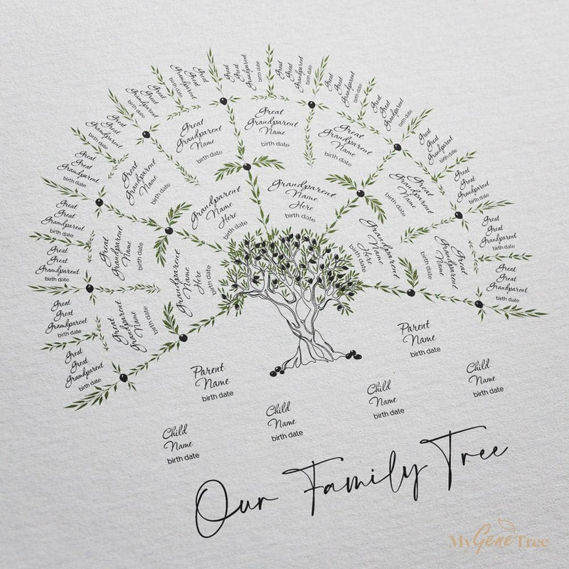 Olive Family Tree Medium Digital Family Tree Template MyGeneTree