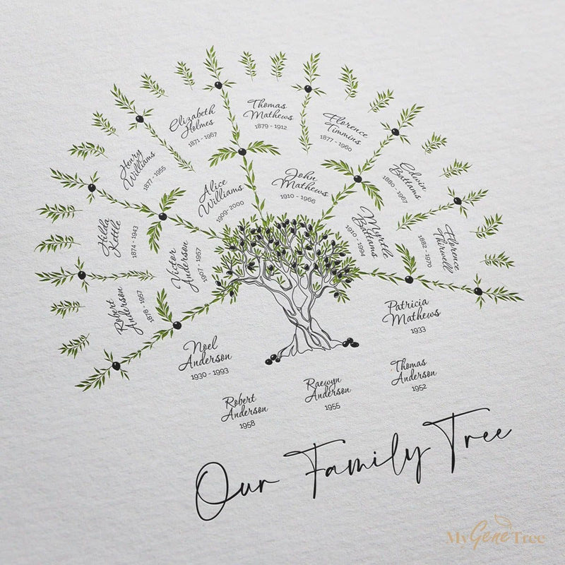 Olive Family Tree small with children Digital Family Tree Template MyGeneTree