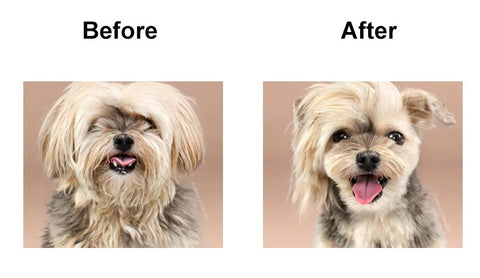 Happy Dog before and after trimmer shave