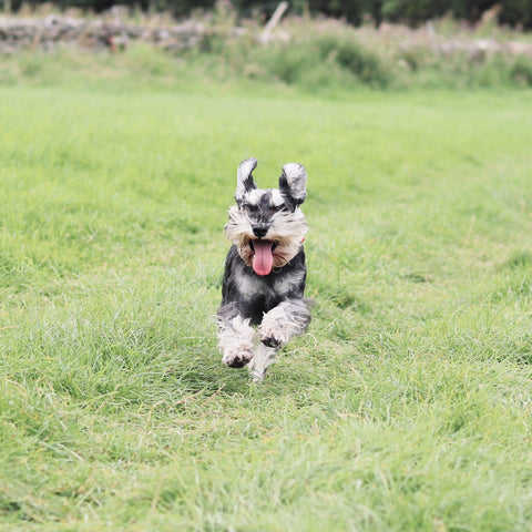 A HAPPY DOG IS AN ENRICHED DOG