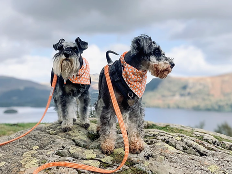 SUPPORTING SCHNAUZERFEST IN THE Lake District