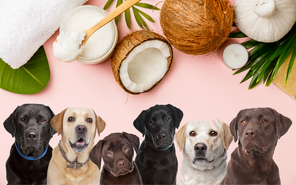 5 science-based benefits of coconut oil for dogs