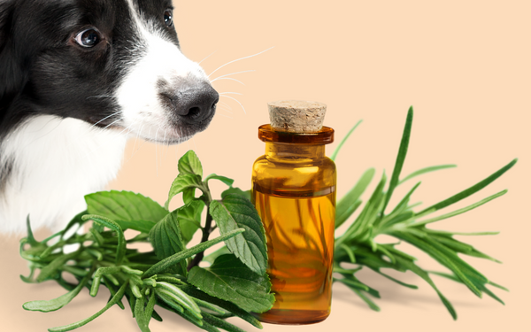is rosemary good for dogs