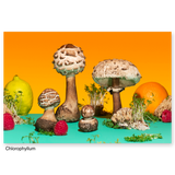 Phyllis Ma: Mushrooms and Friends series postcards