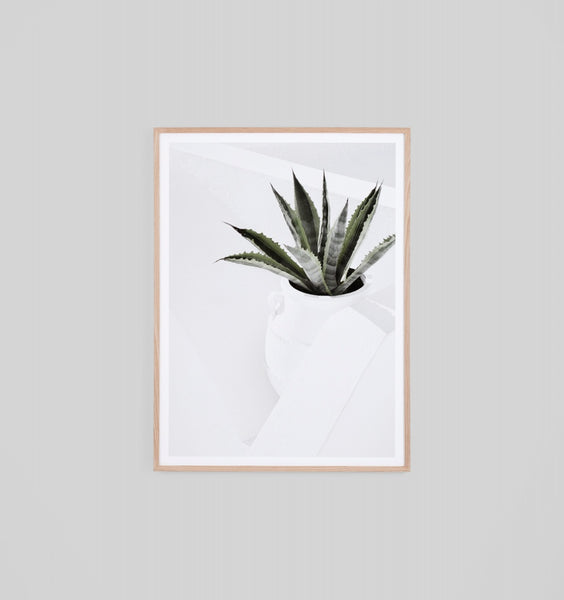 Summer Agave - natural frame