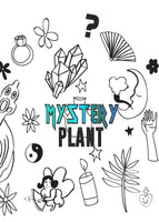 MYSTERY PLANT- BEGINNERS ~ Live Plant
