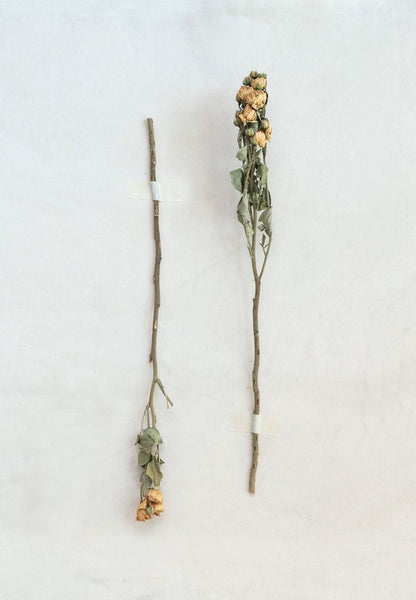 Dried Natural Rose Bunch