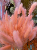 Pastel Pink Dried Bunny Tail Grass Bundle