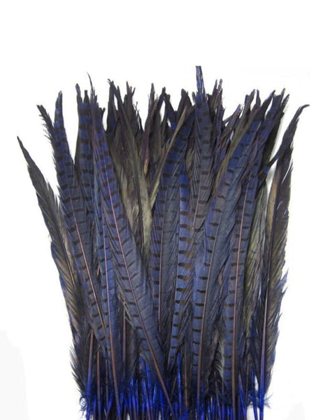 Royal Hyacinth Pheasant Feathers