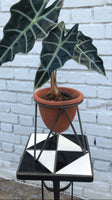 Terra-Cotta Planter with Iron Stand