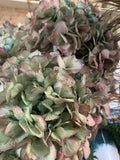 Natural Dried French Hydrangea