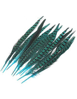Turquoise Pheasant Feathers