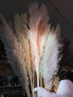 Tall Pampas Grass Bundles (3 Colors)
