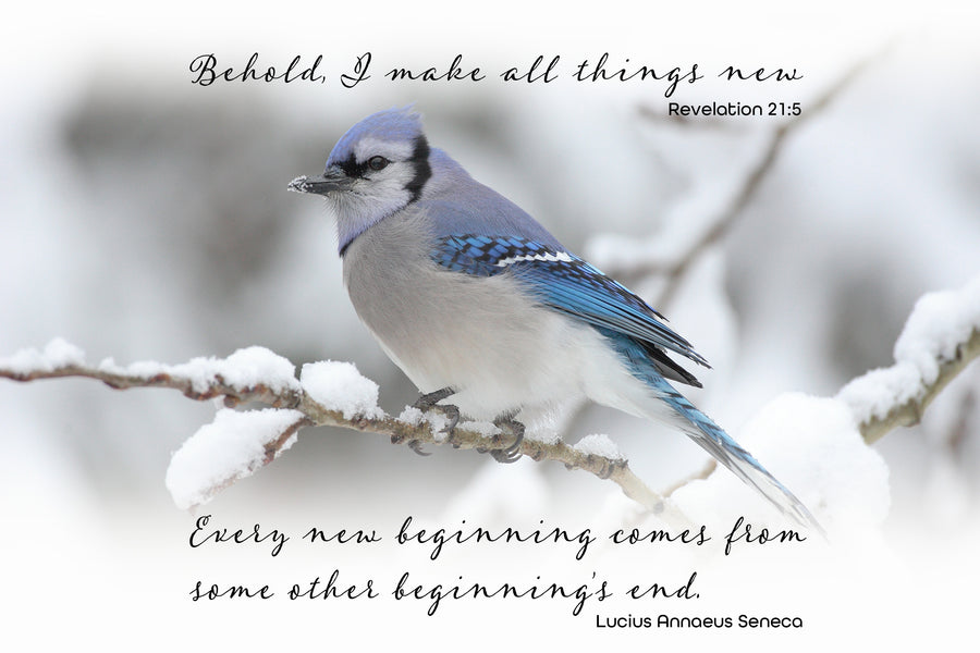 The Blue Jay - Every new beginning comes from some other beginning's end........