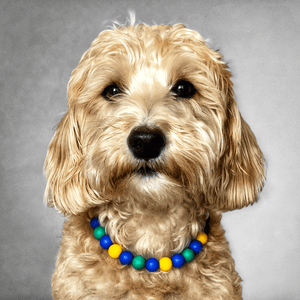 Beaded Monkey Silicone Beaded Dog Collar - Portrait of Dog Wearing Collar