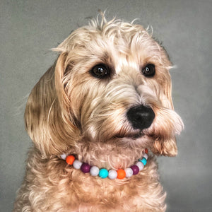 Bedrock Fun Silicone Beaded Dog Collar - Ruff Stitched Winter 2020 Collection - Portrait of Dog Wearing Collar.