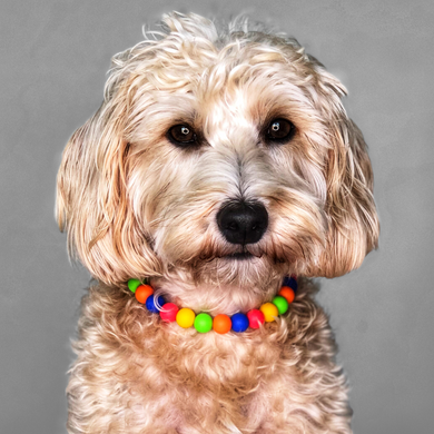 Bert & Ernie Silicone Beaded Dog Collar - Portrait of Dog Wearing Collar