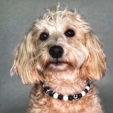 Cat Is The New Black Silicone Beaded Dog Collar - Ruff Stitched Winter 2020 Collection - Portrait of Dog Wearing Collar
