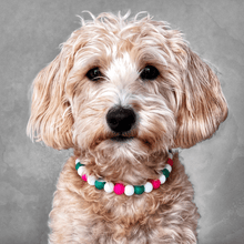 Load image into Gallery viewer, Chamelon Silicone Beaded Dog Collar - Portrait of Dog Wearing Collar