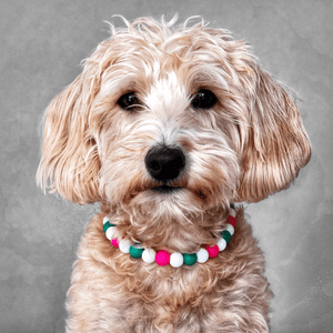 Chamelon Silicone Beaded Dog Collar - Portrait of Dog Wearing Collar