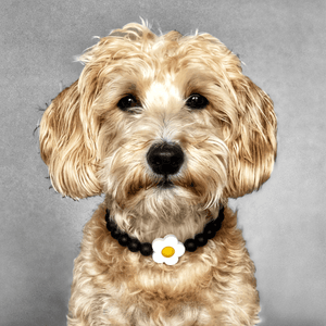 Daisies Silicone Beaded Dog Collar - Portrait of Dog Wearing Collar
