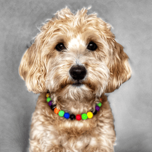 Load image into Gallery viewer, Dino World Silicone Beaded Dog Collar - Portrait of Dog Wearing Collar