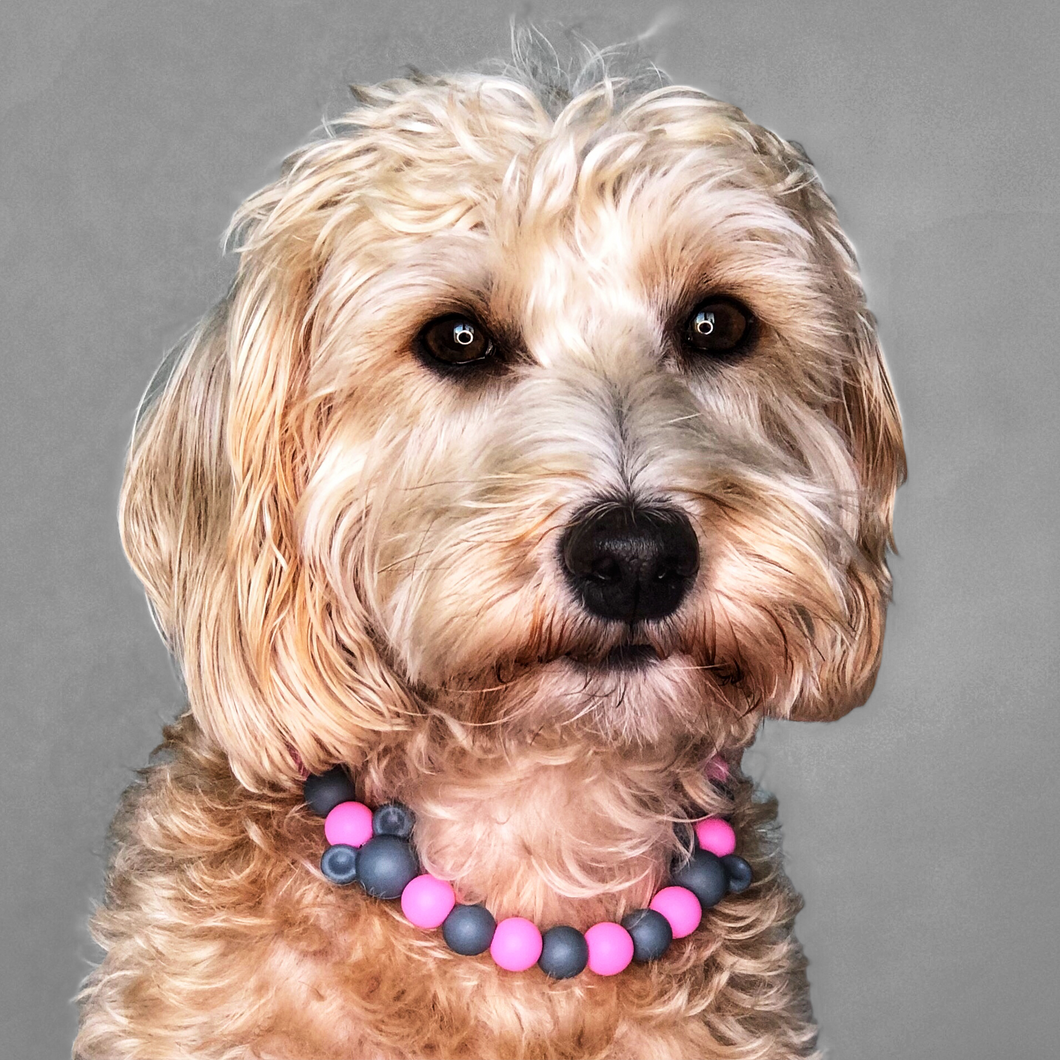 The Beaded Monkey - Everything Mice Silicone Beaded Dog Collar - Ruff Stitched Fall 2020 Collection - Portrait of Dog Wearing Collar