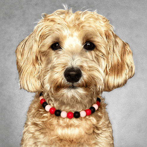 Fla-Mingle Silicone Beaded Dog Collar - Portrait of Dog Wearing Collar